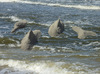 Cartoon: Dolphins (small) by thalasso tagged dolphin,delfin,ocean,sea,beach,art