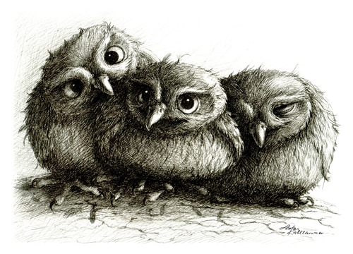 Cartoon: 3 junge Eulen - 3 young owls (medium) by Stefan Kahlhammer tagged birds,vögel,illustration,kahlhammer,flankale,flankalan,eulen,jung,jung,eulen,eule,tiere,vögel,vogel,natur,illustration