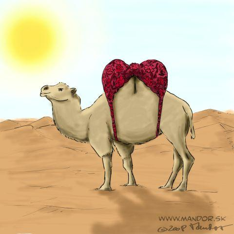 Animated Camel Pictures http://www.toonpool.com/cartoons/Camel_14070