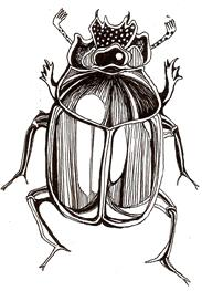 Cartoon: Bug (medium) by Monica Rizzolli tagged bug,nature