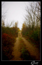 Cartoon: The Lake Road 5 (small) by Krinisty tagged trees,road,dirt,happy,lake,fall,scenery,beautiful,krinisty,art,photography