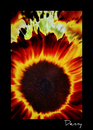 Cartoon: The SUN flower (small) by Krinisty tagged flowers sunflowers burning beautiful bright colorful plants earth nature krinisty art photography