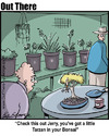 Cartoon: bonsai (small) by George tagged bonsai