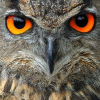 Night Owl's avatar