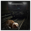 Cartoon: hundemüde (small) by Night Owl tagged hund,zug,dog,train