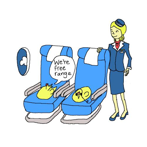 Image result for chicken on an airplane image