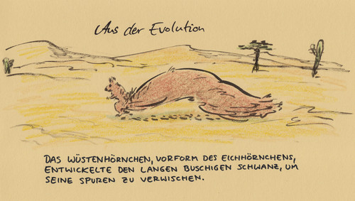 Cartoon: Evolution (medium) by Bernd Zeller tagged evolution,eichhörnchen