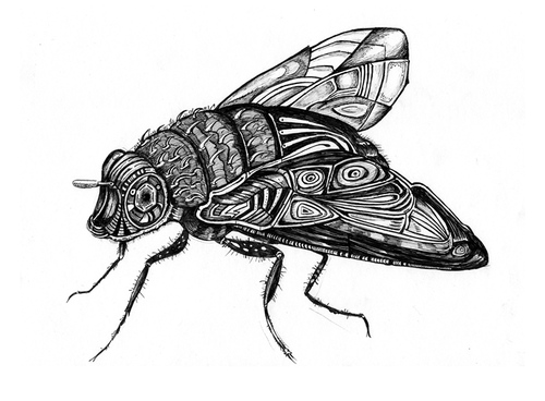 Cartoon: fly (medium) by Battlestar tagged fly,fliege,insects,insekten,natur,illustration,bw