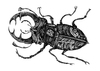 Cartoon: Hirschkäfer (small) by Battlestar tagged insects insekten käfer bug beetle hirschkäfer natur illustration
