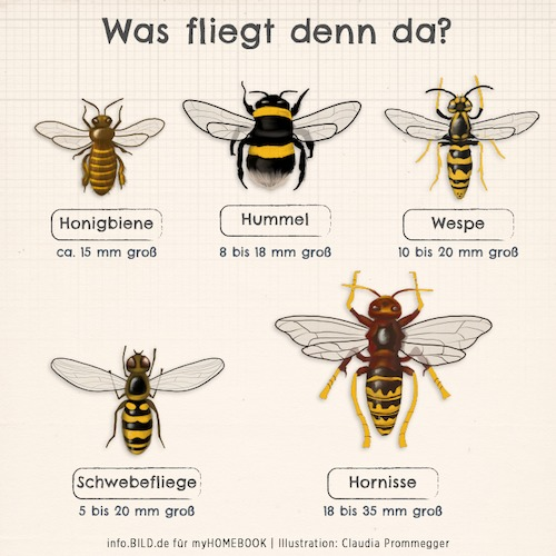 Cartoon: Was fliegt denn da? (medium) by alesza tagged biene,wespe,schwebfliege,hornisse,hummel,bee,horn,insect,insekten,animal,illustration,digital,painting,ipadart,procreate