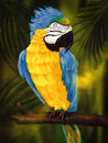 Cartoon: Ara (small) by alesza tagged ara,parrot,bird,animal,jungle,nature,colorful,yellow,blue,beak,painting,illustration,ipadart,procreate