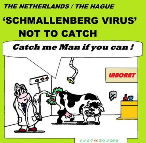 Cartoon: Schmallenberg Virus (medium) by cartoonharry tagged schmallenberg,virus,toonpool,dutch,cartoonharry,cartoonist,cartoon
