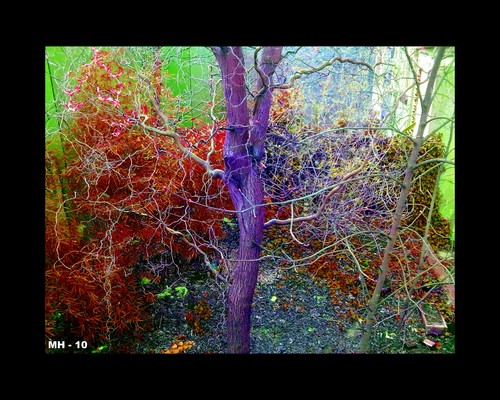 Cartoon: MH - Color Ecstasy (medium) by MoArt Rotterdam tagged color,ecstasy,fantasticcolors