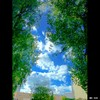 Cartoon: MH - Looking Up VI (small) by MoArt Rotterdam tagged rotterdam,lookingup,kijkomhoog,clouds,wolken,trees,bomen,colorful,sky,lucht