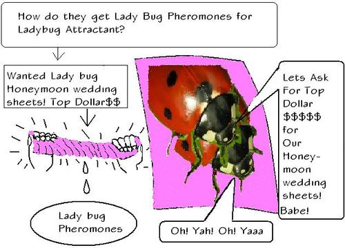 Cartoon: Ladybug Pheromones (medium) by Laisseraller tagged ladybug