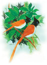 Cartoon: gine bird (small) by damayanthi tagged gine,bird