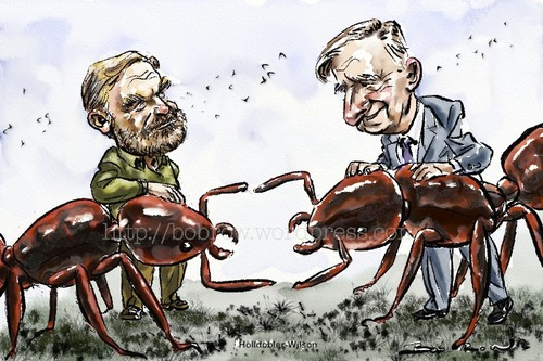 Cartoon: Hölldobler and Wilson (medium) by Bob Row tagged entomology,superorganism,ants,science,sociobiology