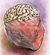 Cartoon: Brain-Heart (small) by Bob Row tagged brain heart intelligence sensibility emotions philosophy psychology