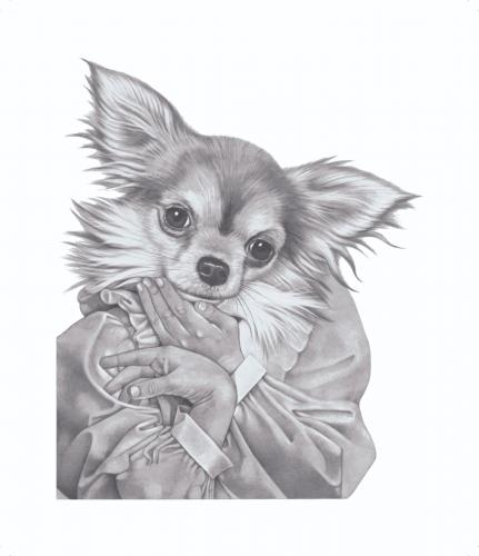 long haired chihuahua pictures. Cartoon: Long Hair Chihuahua