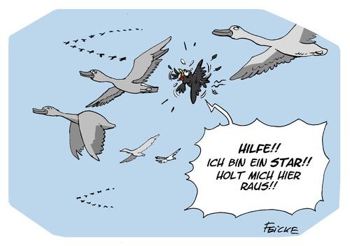 amsel drossel fink und star by feicke media culture cartoon toonpool. Black Bedroom Furniture Sets. Home Design Ideas