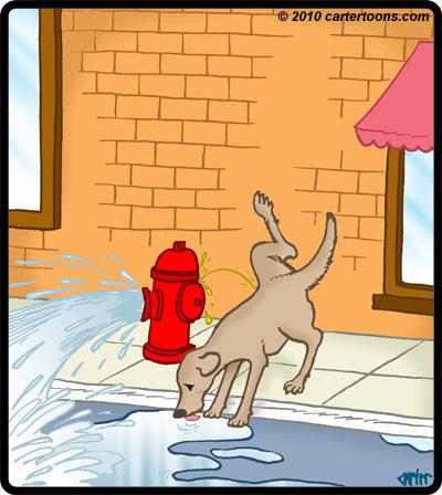 Drink dog pee lisbo