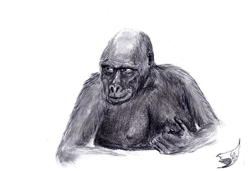 Cartoon: Gorilla (medium) by swenson tagged gorilla,ape,affe,tier,animal