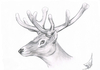 Cartoon: Cervidae (small) by swenson tagged hirsch deer wild tier animal wildlife 2011