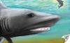 Cartoon: Sharkwater (small) by swenson tagged morphingtargetpainting hai shark see meer wahle wal moon mond sky haven himmel