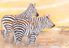 Cartoon: EVOLUTION  ZEBRA TEDDY (small) by T-BOY tagged evolution,zebra,teddy
