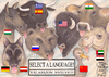 Cartoon: SELECT A LANGUAGE (small) by T-BOY tagged select,language