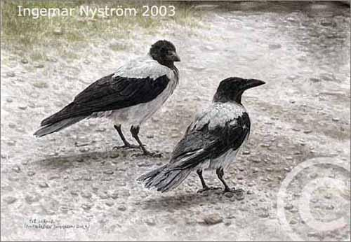 Cartoon: Two crowes (medium) by Ingemar tagged birds,crow,art,watercolor