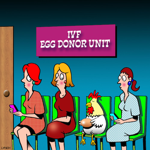 Cartoon: Egg donor (medium) by toons tagged ivf,egg,donors,pregnancy,babies,chickens,eggs,assisted,chooks,farmyard,ivf,egg,donors,pregnancy,babies,chickens,eggs,assisted,chooks,farmyard