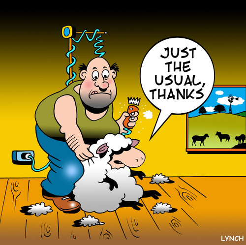Cartoon: just the usual (medium) by toons tagged shearing,sheep,wool,haircut,barber,farm,animals