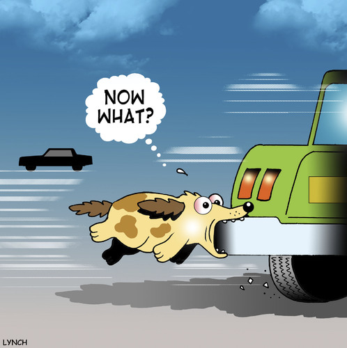 Now What By Toons Nature Cartoon Toonpool