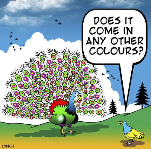 Cartoon: other colours (medium) by toons tagged peacocks,courting,dating,fussy