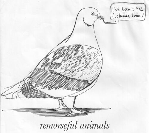 Cartoon: Remorseful animals (medium) by prinzparadox tagged pidgeon,taube,animal,tier,conflict,nature,mankind,people