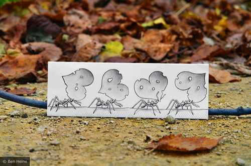 Cartoon: Pencil Vs Camera - 39 (medium) by BenHeine tagged 200mm,amour,pheromons,ant,ben,heine,pulse,beat,coeur,cute,drawing,vs,photography,insect,social,folded,fourmis,heart,feuille,paper,autumn,fall,colors,leaf,love,macro,benheine,pvsc,pencil,camera,saint,valentine,samsung,imaging,zoom