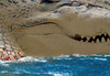 Cartoon: exotic beach (small) by Medi Belortaja tagged exotic beach women girls horror dangerous crocodile