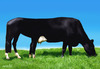 Cartoon: horsecow (small) by Medi Belortaja tagged horse,horsemeat,beef,food,europe,cow,meat,manipulation