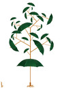 Cartoon: umbrella tree (small) by Medi Belortaja tagged umbrella,tree
