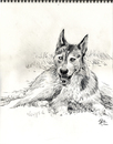 Cartoon: Husky Sketch (small) by halltoons tagged dog,dogs,husky,snow,pencil,drawing,sketch