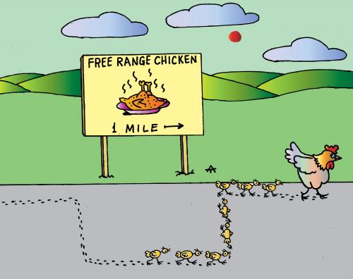 Free Range Chicken Cartoons