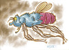 Cartoon: Big Flying Insect (small) by Cartoons and Illustrations by Jim McDermott tagged bugs,insect